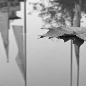 Bild in schwarzweiß: ein Ahornblatt treibt auf einer Pfütze, in ihr spiegeln sich ein Haus und Fahnenmasten.