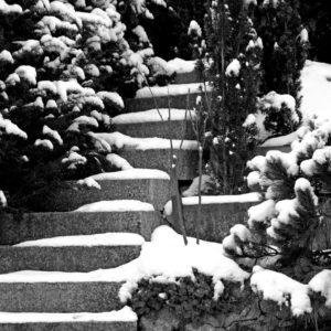 Bild in schwarzweiß: Ein Garten, mit Schnee bedeckt. vom linken Vordergrund nach oben zur Bildmitte führt eine Treppe, die Stufen sind ebenfalls schneebedeckt. am Ende der Treppe ist nichts erkennbares, nur dunkles Gebüsch. um die Treppe herum Büsche und laublose Bäumchen
