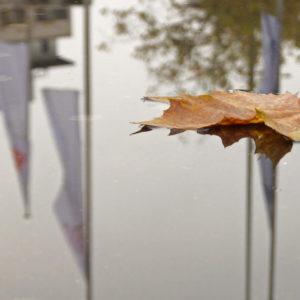 Ein Ahornblatt treibt auf einer Pfütze, in der Pfütze spiegeln sich ein Haus und Fahnenmasten.